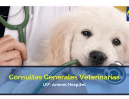 Consulta General Veterinaria