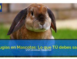 Cirujía en Mascotas: Procedimiento