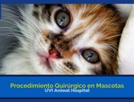 procedimiento quirurgico en veterinarias