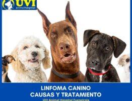 LINFOMA-CANINO-UVIANIMALHOSPITAL