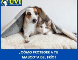 Cuidados-mascotas-frio