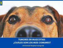 TUMORES-MASCOTAS-UVIANIMALHOSPITAL