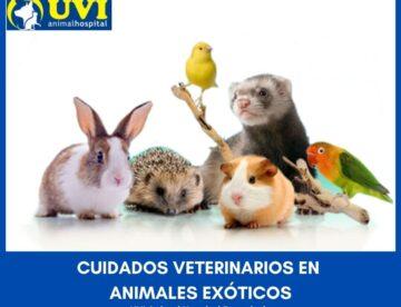 Animales-exoticos-UVIANIMALHOSPITAL
