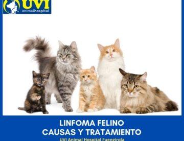 LINFOMA-FELINO-UVIANIMALHOSPITAL