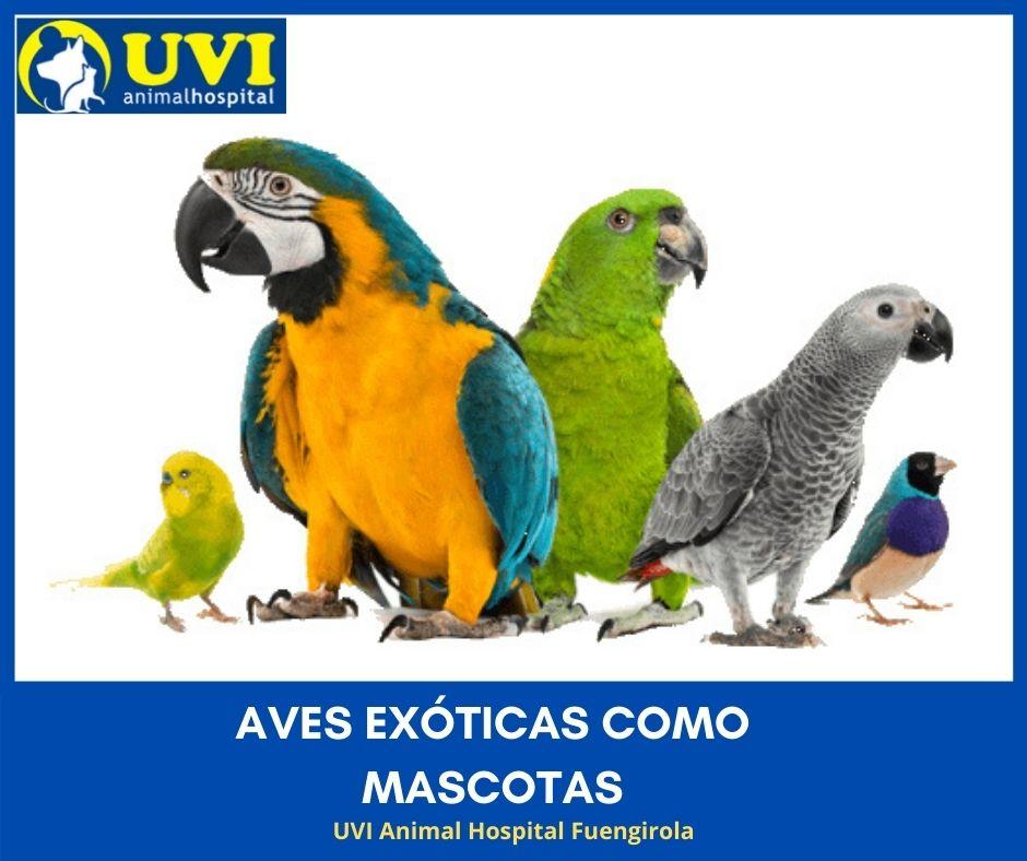 AVES-EXÓTICAS-MASCOTAS-UVIANIMAL