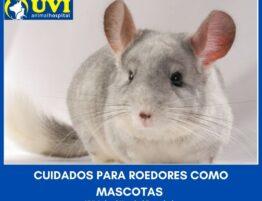 roedores-mascotas-UVIANIMAL