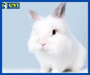 Cuidados-Veterinarios-conejos