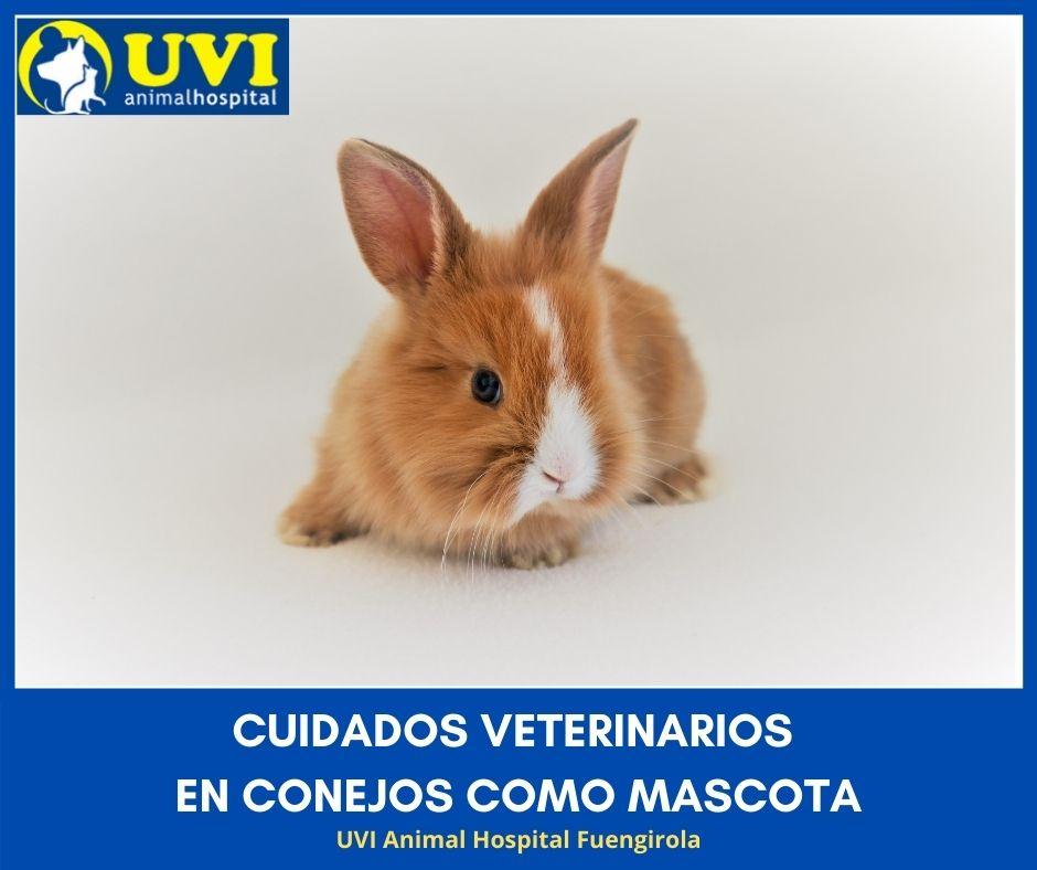 Cuidados-veterinarios-conejos-Mascota