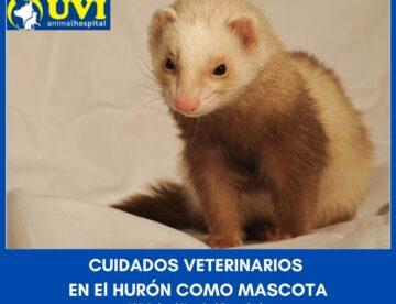 Huron-mascota-UVIANIMALHOSPITAL