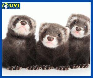 uvianimalhospital-huron-mascota